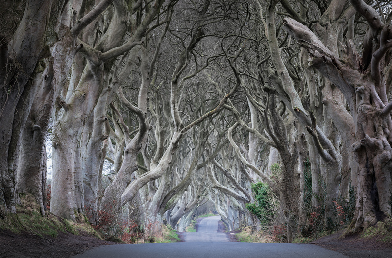 Dark Hedges Co.Antrim Colour